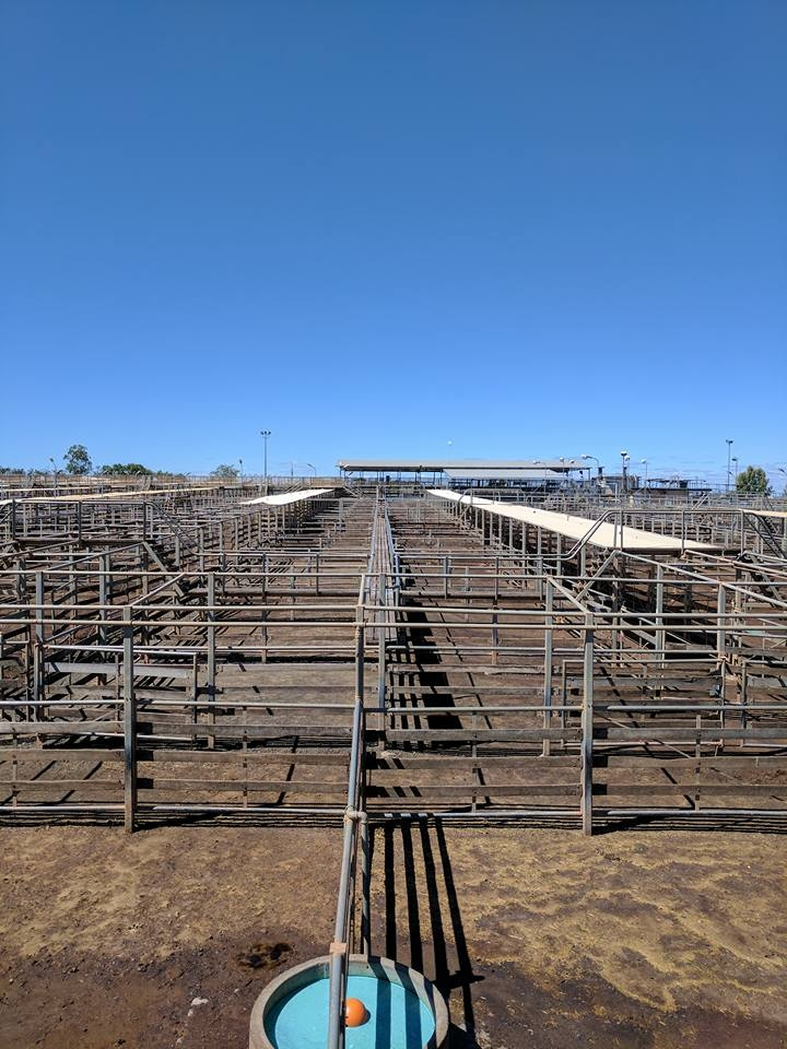 Roma Saleyards. Fantastic lessons in circulation, efficiency and the interconnection of the module in design. A 'pen' in the yards, being 6x6m carries the same capacity as a 'deck' being one storey of a cattle truck or road train. An amazing space to watch operate. We stuck out like sore thumbs, not adhering to the dress code of boots, jeans, long sleeved checkered shirts and wide brim hat. Good way to get the attention of people though and to start a conversation.