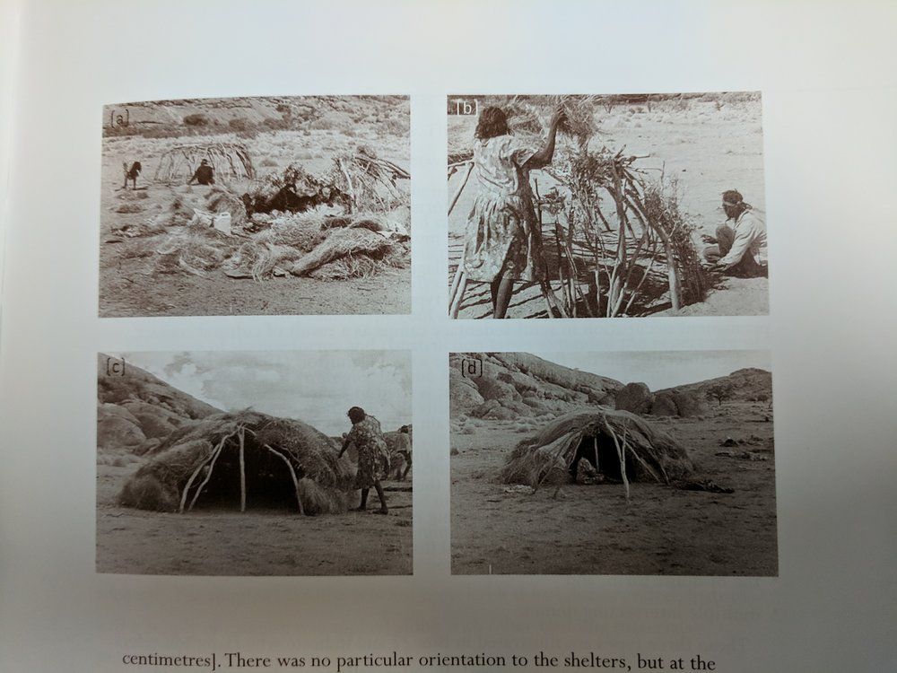 The process of rebuilding a domed wiltja in a Yankuntjatjara camp, SA