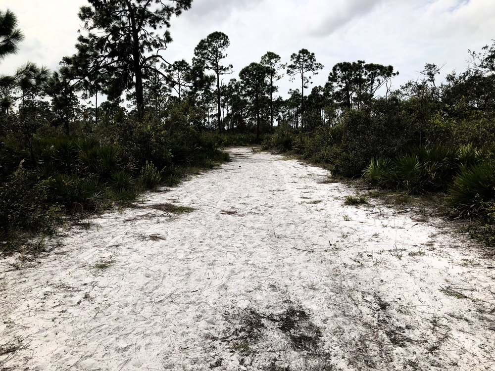 Sand - As the Blue (Estero River) trail nears the river it changes from grass to sand