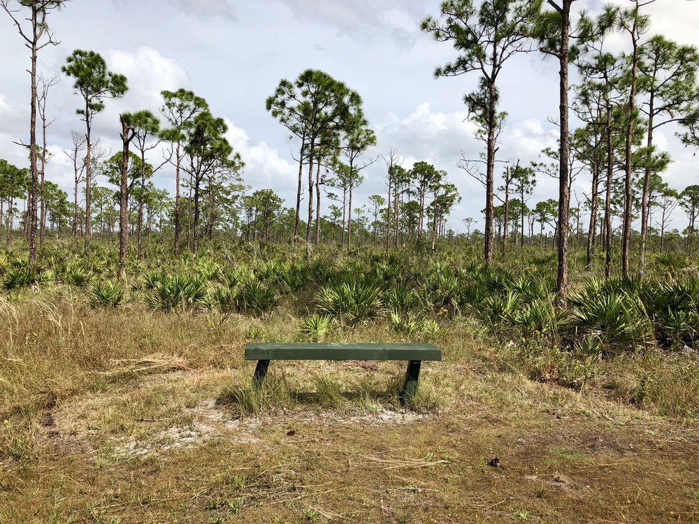 Rest? - If you're looking for a bench fully exposed to South Florida's punishing sun, this may just be the park for you!