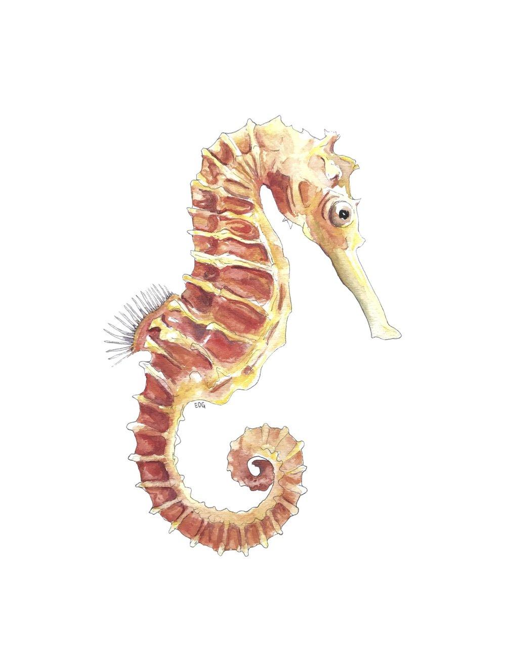 seahorse_print.jpg