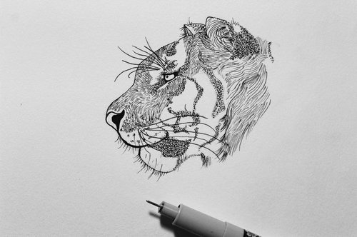 Tiger Profile