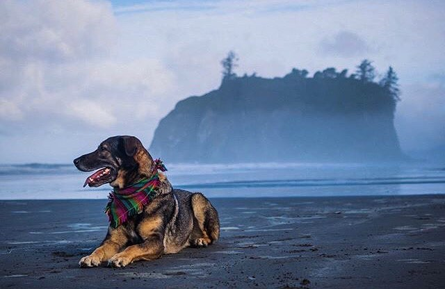 La Push, baby, push, baby. Pups and views are still a winning combination for happiness! Comment with your favorite happy / good vibes combos. 🐶 + 👀❤️ = 🙌  And don't forget to tag us! #StrayTgthr #GetOutThere #lapushbeach 🌊⛰🌲 PC: @themobiustrips