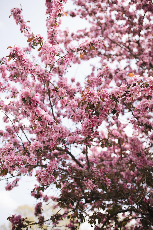Flowering Tree 2.jpg
