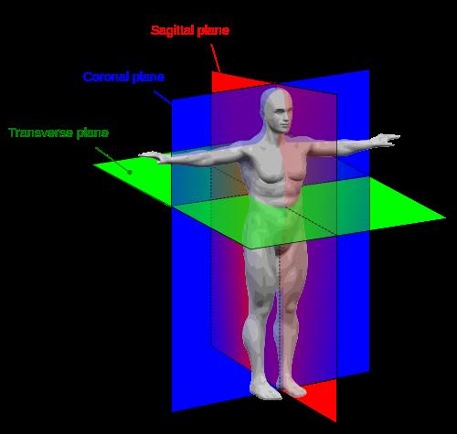 500px-Human_anatomy_planes.svg