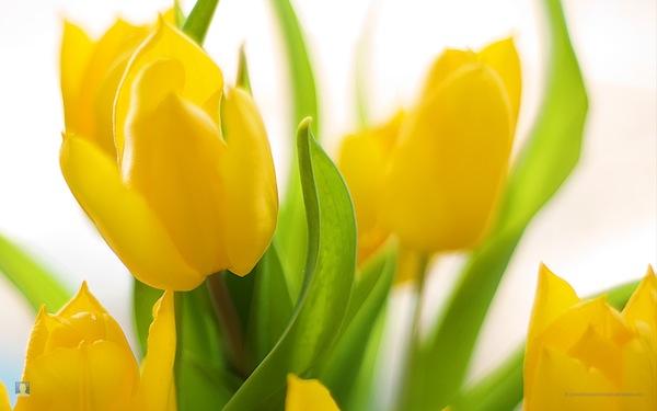 spring-flowers-mbb.jpg