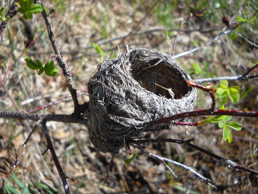 bird-nest.jpg