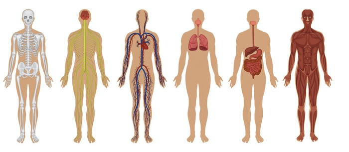 mbb-human-body.jpg
