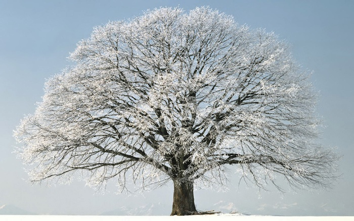 mbb-winter-tree.jpg