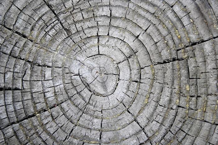 tree-ring.jpg