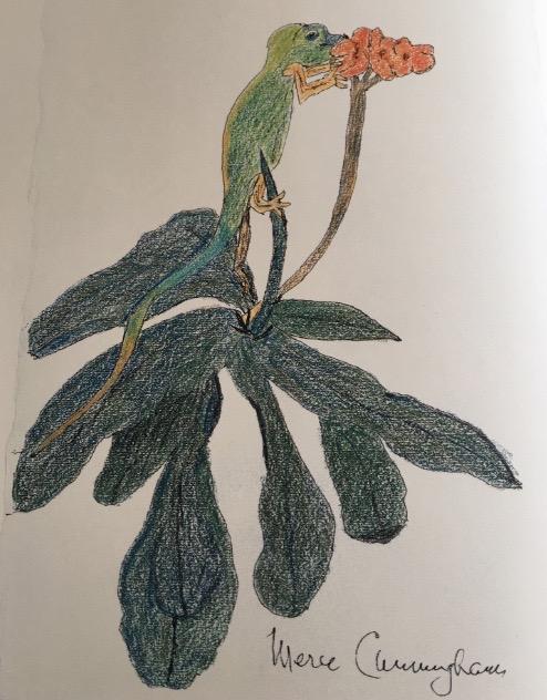 mercecunninghamgecko