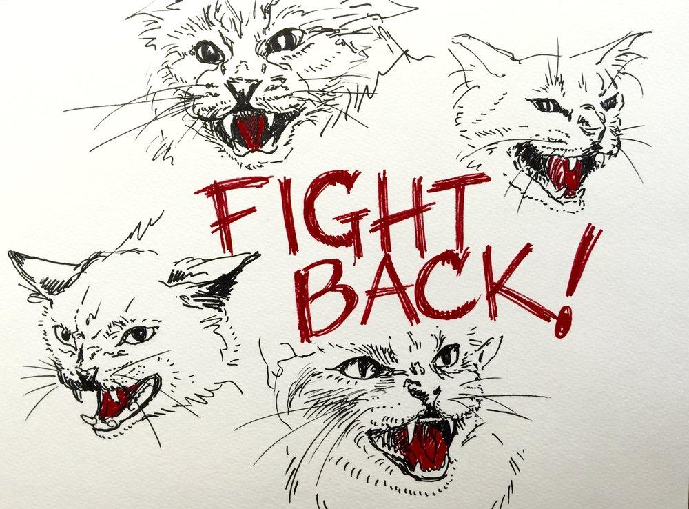 angrycatswhite.jpg