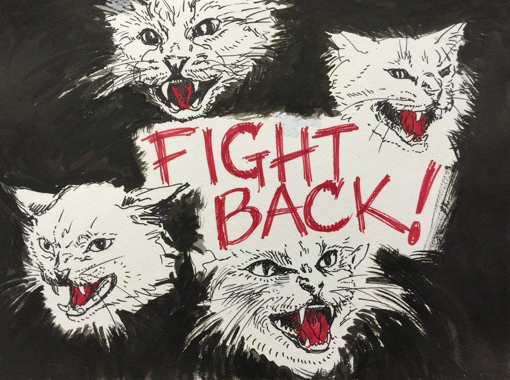 angrycatsblack.jpg