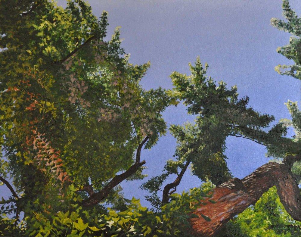 Bird's Eye View, 18x24 - $345