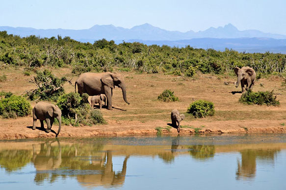 4by6-watering-hole-photo.jpg
