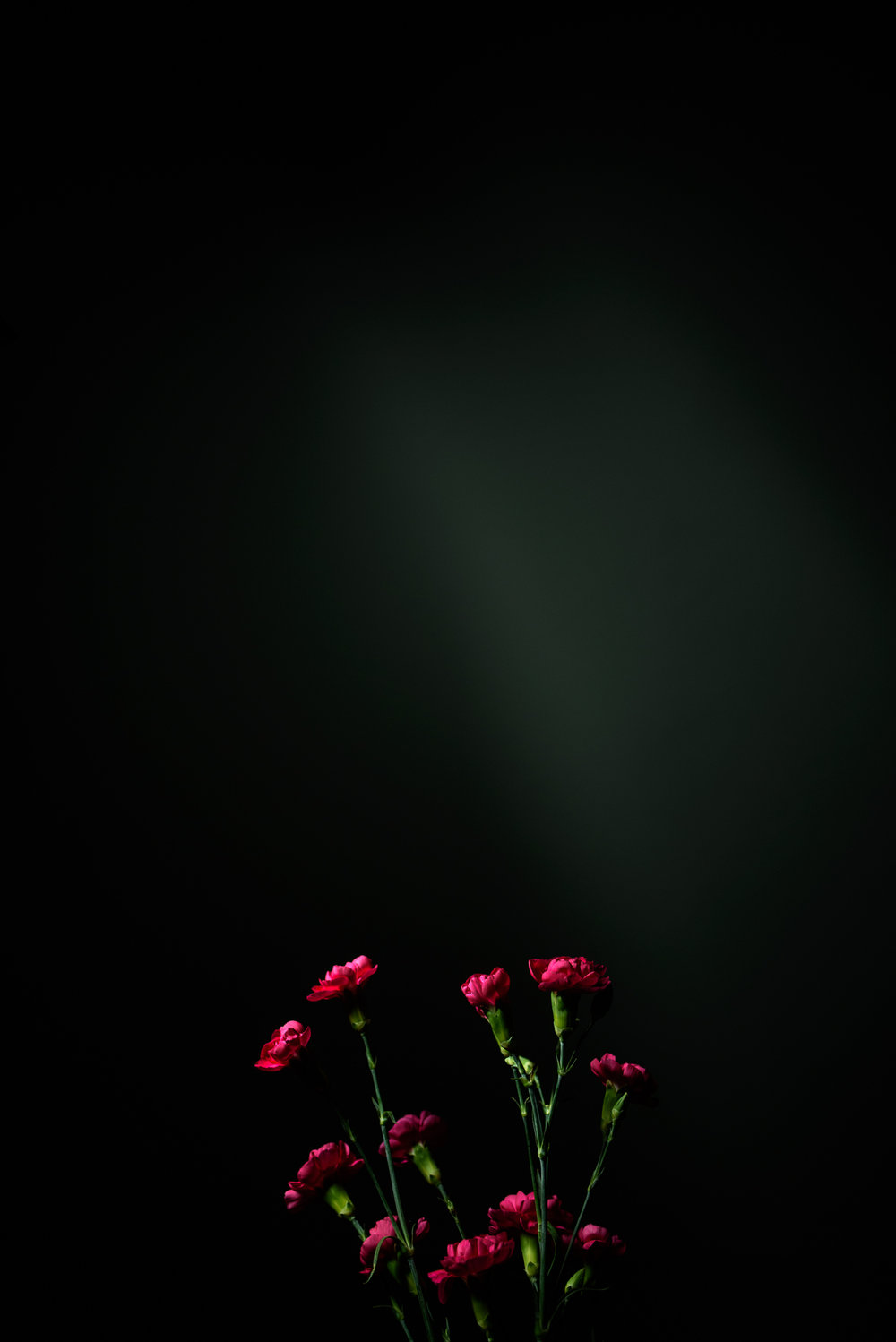 icelightflowers-9