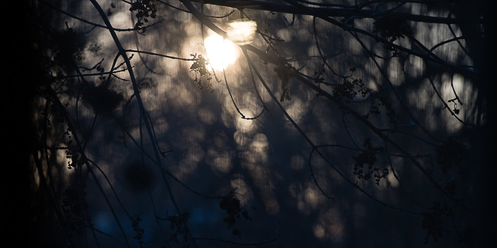 Evening light through branches in Lincoln, Nebraska