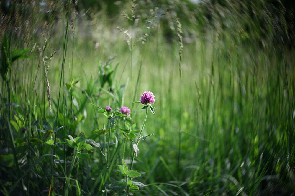 Misty-Prochaska-Lincoln-Nebraska-still life-nature-20.jpg