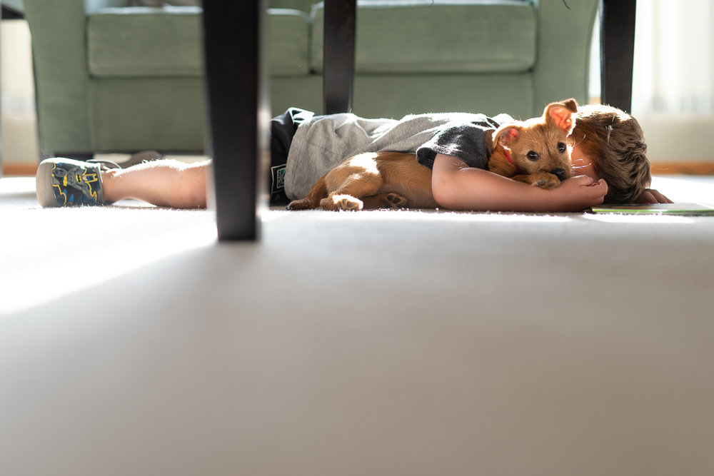 boy laying on the floor with terrier mix puppy in beautiful light Lincoln Nebraska.jpg
