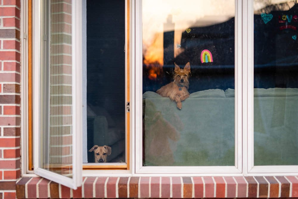 two dogs looking out a window.jpg