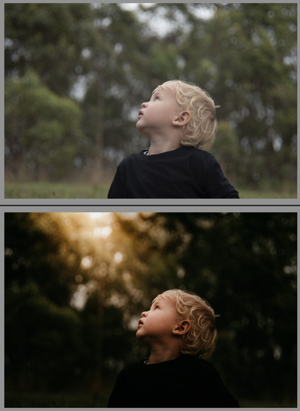 First time using the tools in Lightroom to make an ordinary photo magical