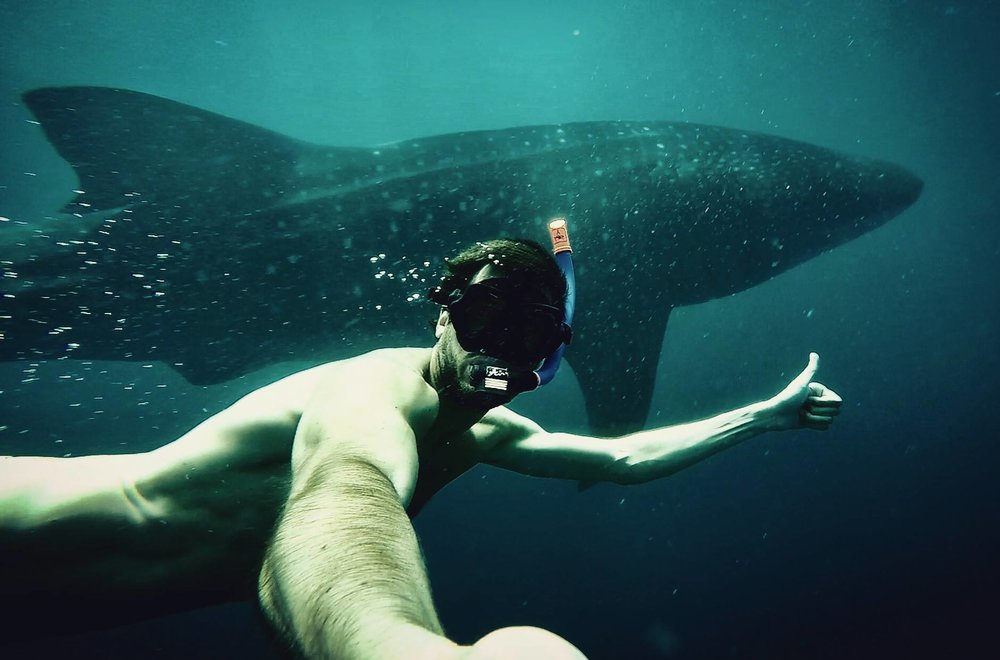 Greg's new friend the 7m whale shark