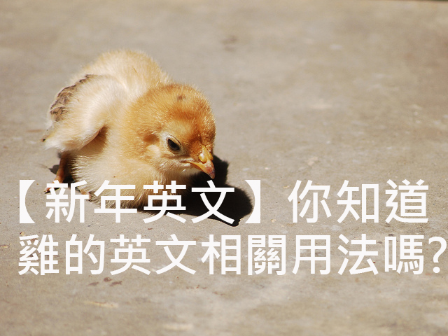 圖片來源:Chick/Tom Coppen https://goo.gl/dKUgeq