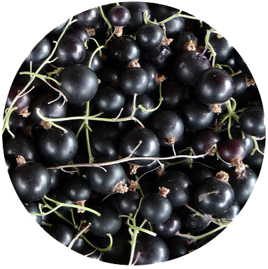 BLACKCURRANTS We use Blackcurrants for their perfumed skin and combined sweet and sour fruit pulp. They give a real zing, an absolute freshness and 'juiciness' to the gin.
