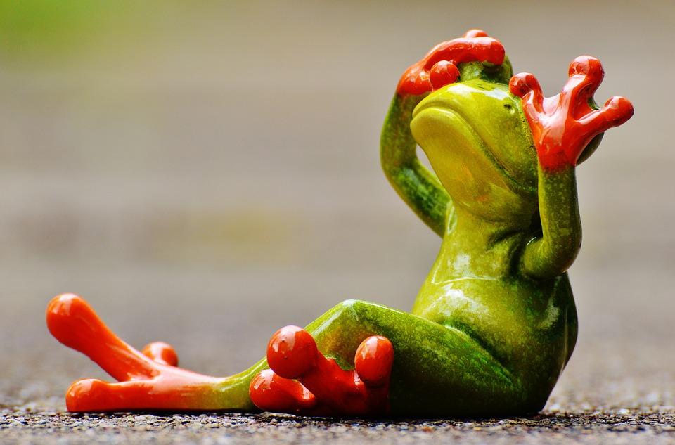 frog-1274768_960_720.jpg