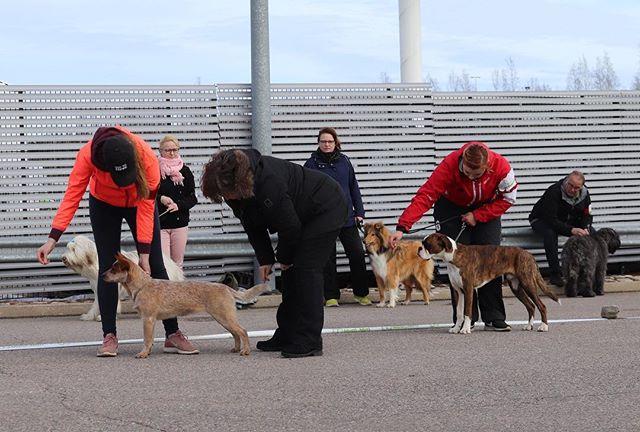 Our Match Show 30.3.2019. More photos can be found on our Facebook page Borgå Dogcare 😃🐕 Photos: @zseerl #matchshow #dogshow #hundshow #akan #borgåfolkakademi #finland #helsinki #porvoo #borgå #epoo #ebbo #sipo #sipoo #vantaa #dogs #doggos #hunder #hundar #koira #puppies