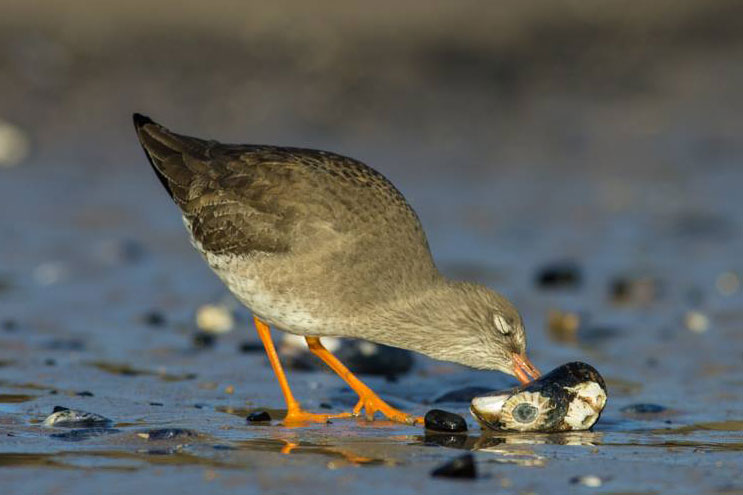 Migratory birds use stock up with food at Wat Tyler. Image © Neil Phillips.