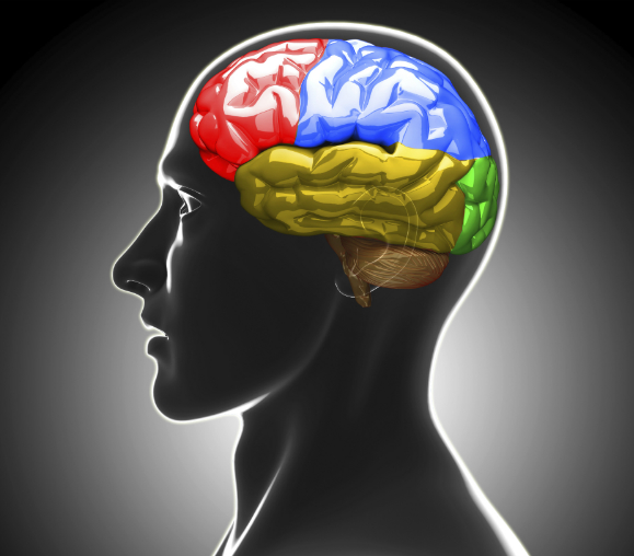 iStock_brain_smaller_cropped