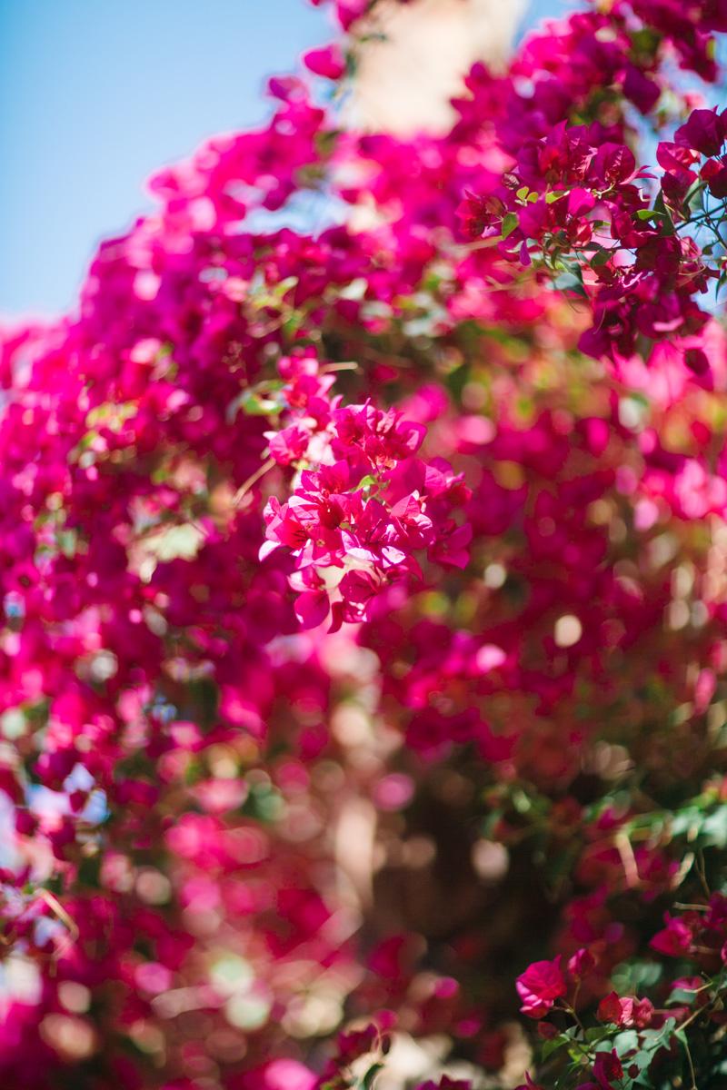mibelleinc.com | The Parker Hotel Weddings | Mi Belle Photography | Palm Springs Wedding Photographers | Destination Photographer _ (1).jpg