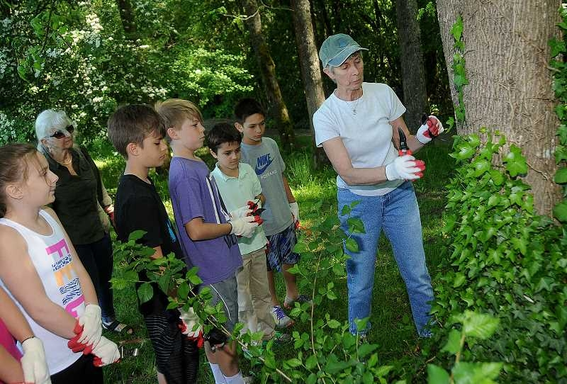 Volunteer Barbara Fisher teaches students from Hallinan Elementary School how to remove invasive English ivy from a tree. Without removal, ivy will eventually choke and kill even the biggest trees.  Photo by Vern Uyetake, courtesy of Pamplin Media.
