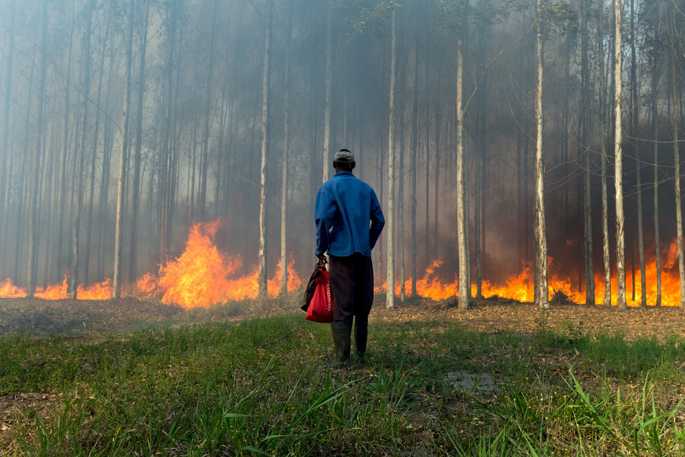 Monzi  A fire rages through the forest as a man tries to make his way home.  Format: Hahnemuhle Photo Rag Size: 11.69 x 16.53 inches (A3) Signed, Edition of 20 Price increases as Edition sells R1800 (approx. $130)