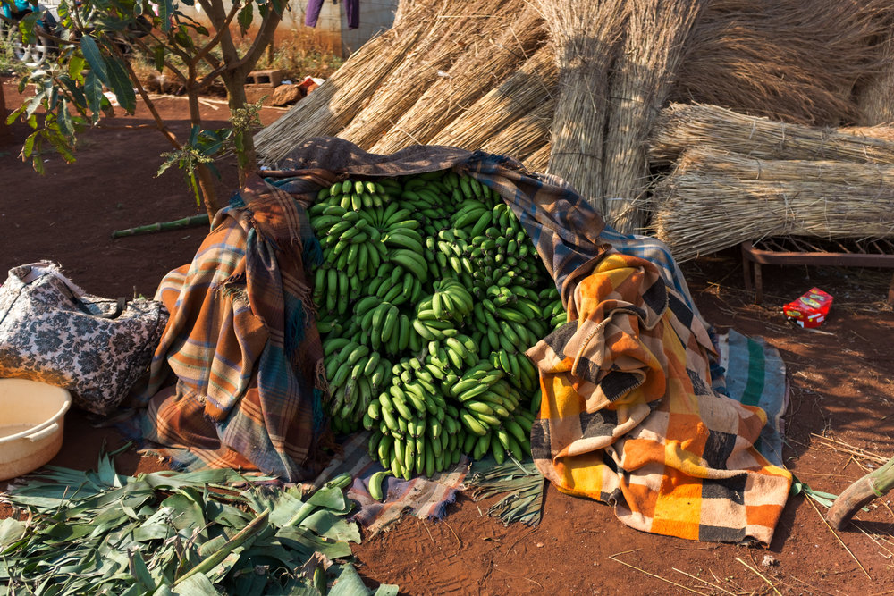 Hluhluwe  Bananas kept under blankets to speed up the ripening process.  Format: Hahnemuhle Photo Rag Size: 11.69 x 16.53 inches (A3) Signed, Edition of 20 Price increases as Edition sells R1800 (approx. $130)