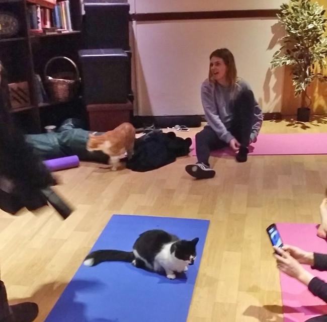 lady-dinahs-cat-yoga-1-e1424436735377.jpg