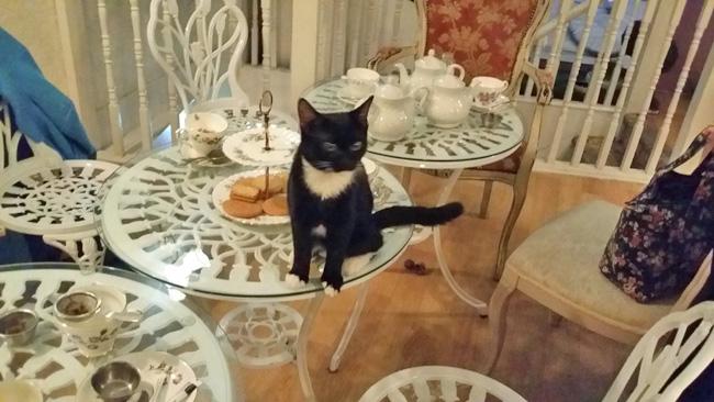 lady-dinahs-cat-yoga-4.jpg