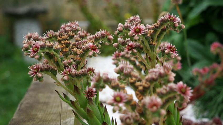 alpine-flowers-e1436895606639.jpg
