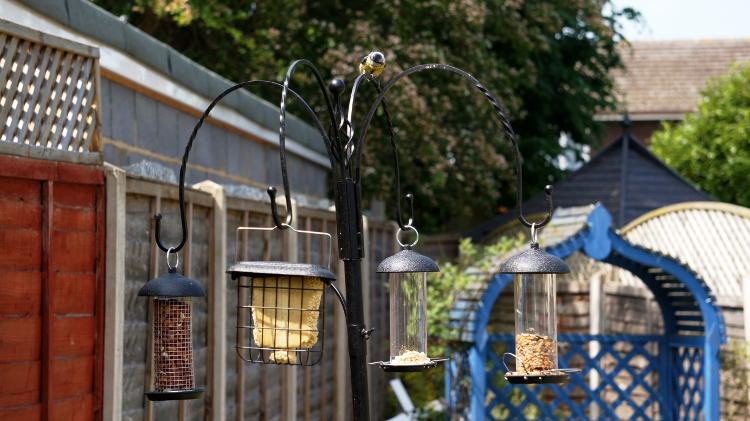 bird-feeder-blue-tit.jpg