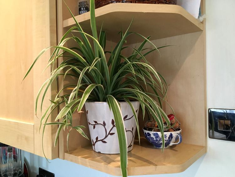 house-plant-3