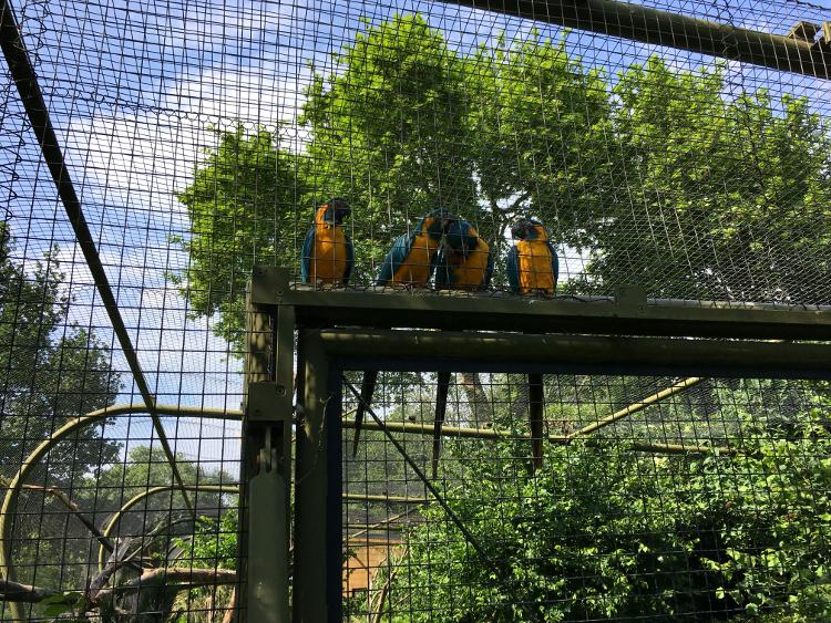 london-zoo-parrots.jpg