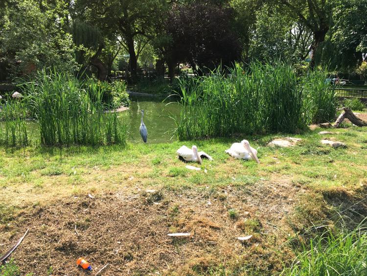 london-zoo-pelicans.jpg
