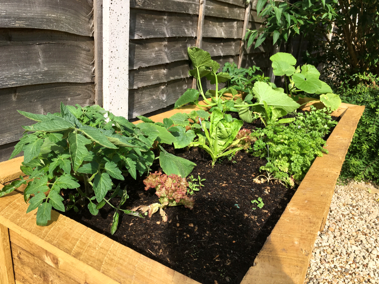 raised vegetable bed after
