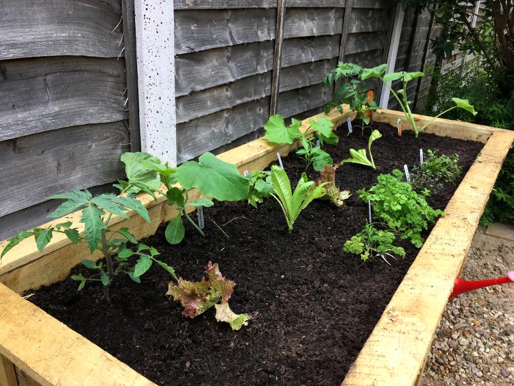 raised vegetable bed before