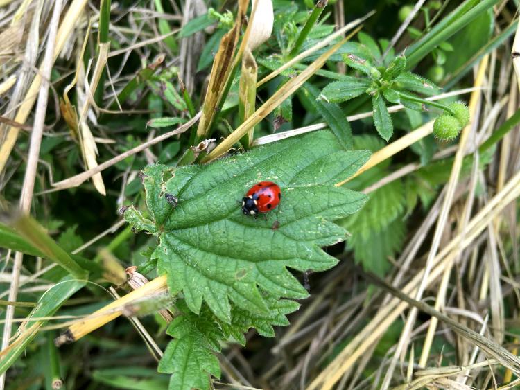 river-walk-ladybird.jpg