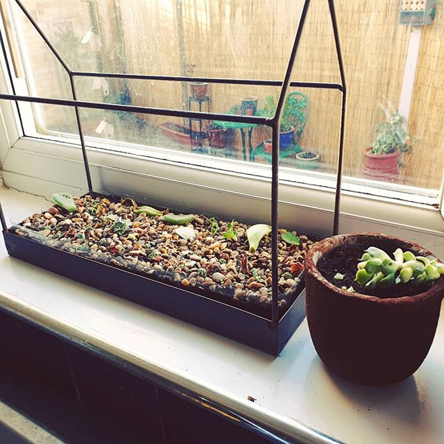 The propagation station. Day off well spent. . . #Propagation #PropagationStation #Succulents #Succulovers #PlantBabies #HousePlants #HousePlantsOfInstagram #HousePlantClub