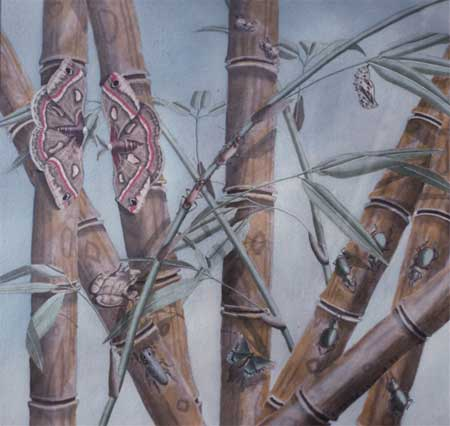"Insects in Bamboo - Acrylic | 24""x36"""