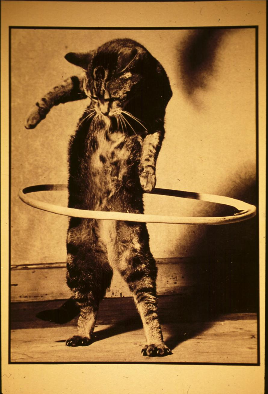 cat_hoop.jpg