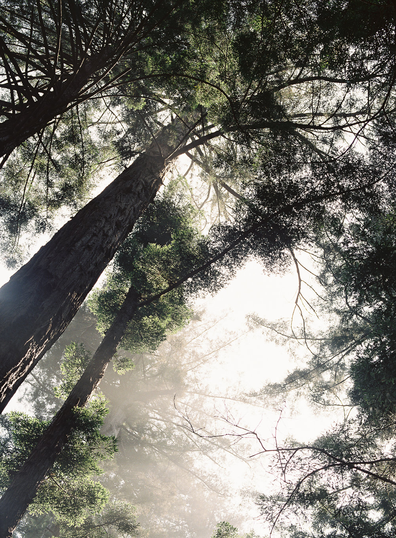 annkathrinkoch_015_redwoods.jpg